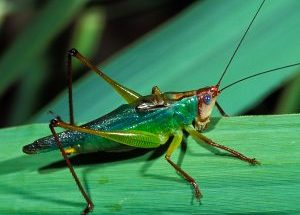 Why insects are your key to gaining business opportunities