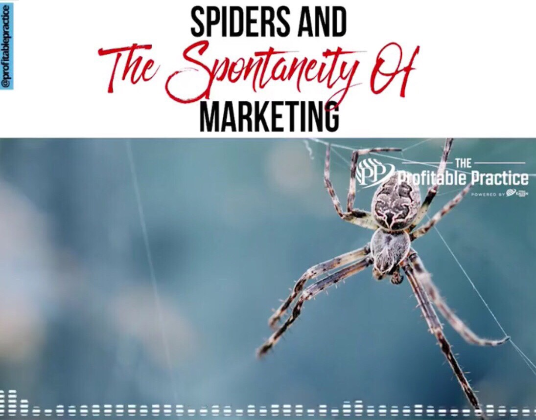 Spiders and The Spontaneity Of Marketing